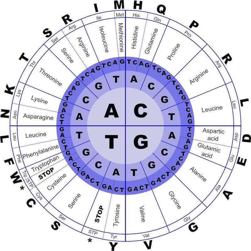 Bild von BCAA Nebenwirkungen – Darauf sollte geachtet werden