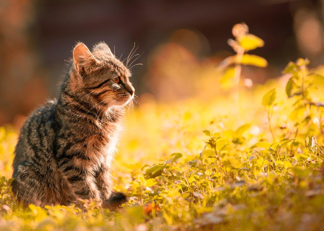 Bild von CBD für Katzen – Dosierung, Terpene, Anwendung