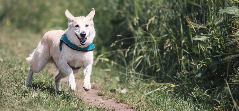 Bild von CBD für Hunde – Hilfe aus der Natur für Ihre Fellnase